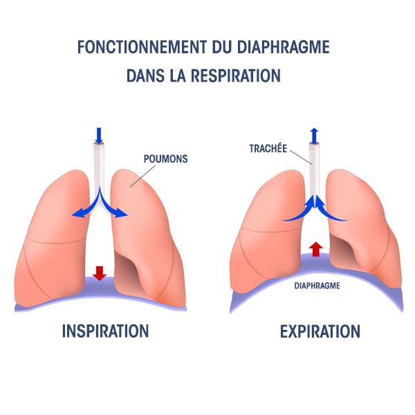 Chirurgie du diaphragme : éventration, hernie